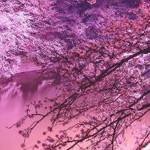Festival della cultura giapponese a Sorrento