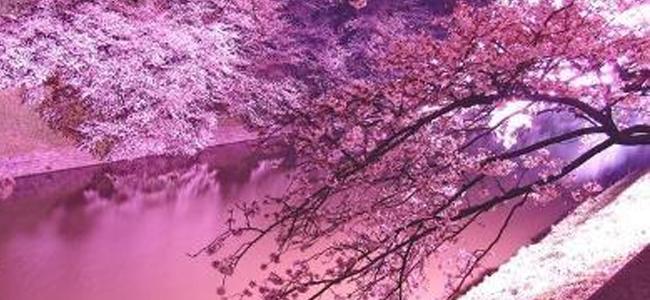 A Sorrento il festival di cultura giapponese