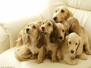 Avvelenamento cani a Sorrento