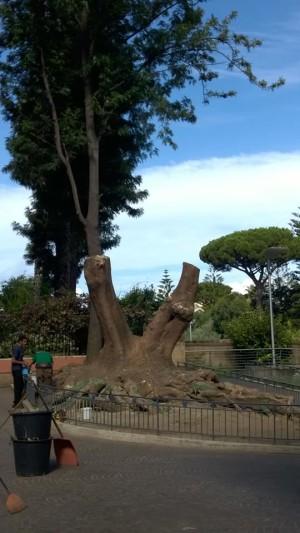 Fitolacca Piazza Lauro
