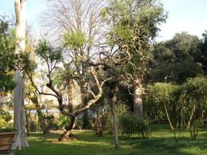 Real bosco di Capodimonte